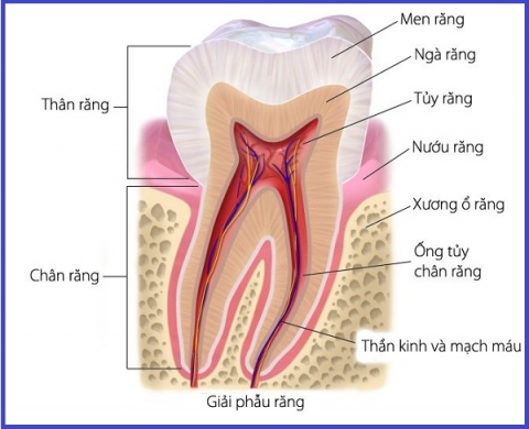 Chữa tủy răng